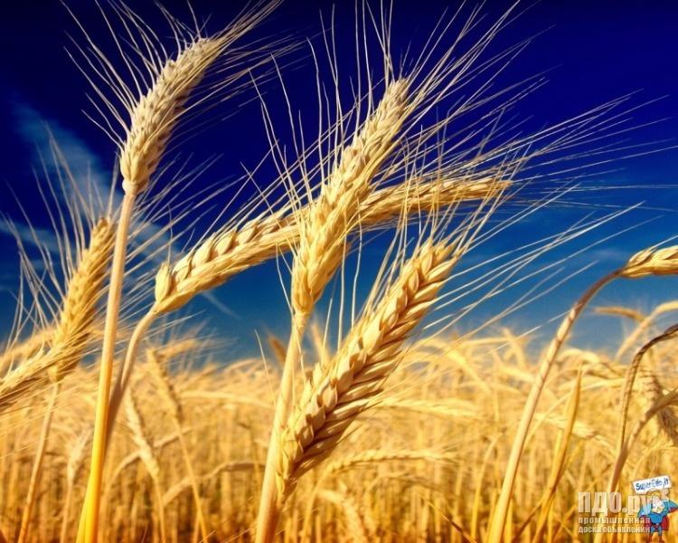 Пшеница фураж, прод, ячмень, рожь, овес,кукуруза по. заявке.