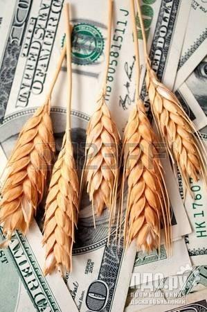 Закупаю пшеницу выше рыночной на 10 коп !!!