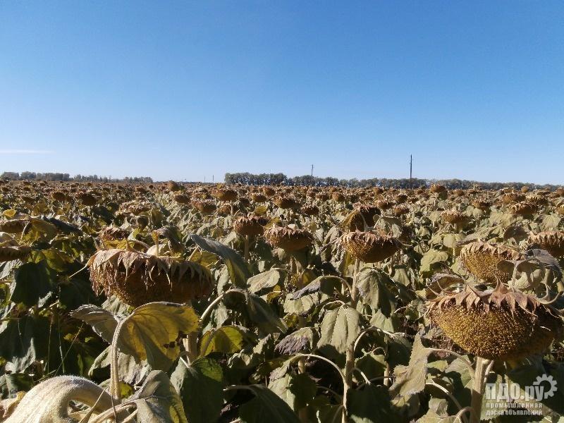 Элитные семена сельскохозяйственных культур