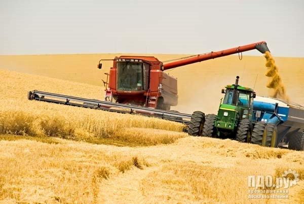 Покупаю пшеницу на ТД РИФ
