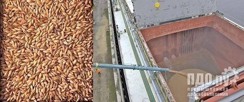 Barley - 20000 tons