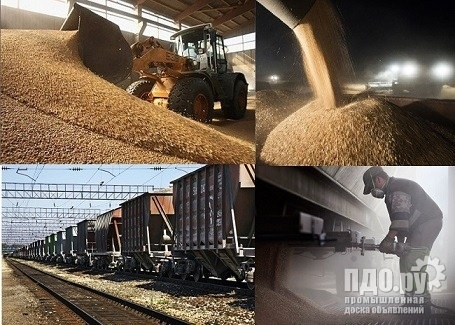 Wheat food - protein 14 - 45000 tons