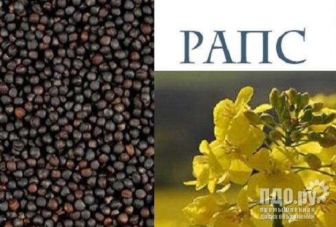 Рапс масличный - желтый - 13500 тн