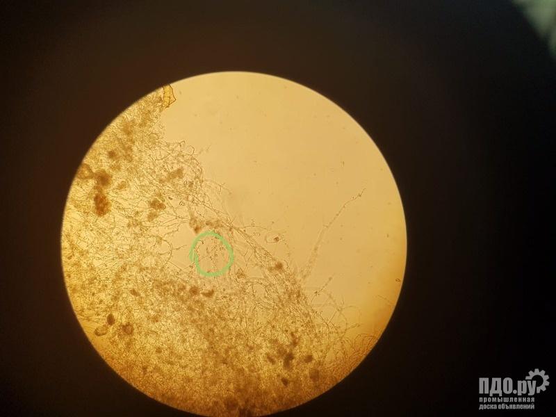 Триходерма и Азотобактер комплексный биопрепарат