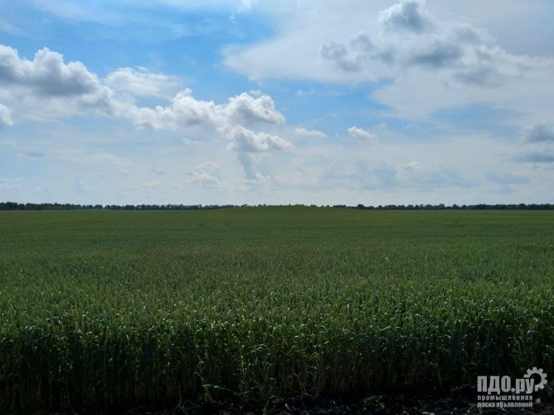 Земельный участок 1400 Га