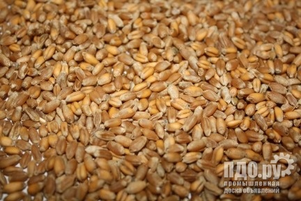 Куплю!Пшеницу!Ячмень!Кукурузу!Горох!