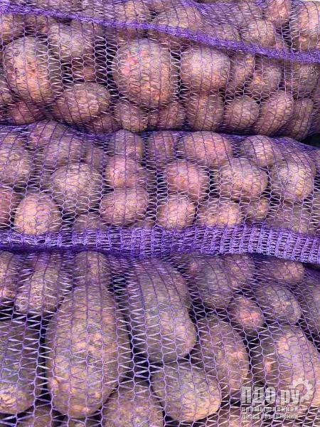 Картофель, свекла , морковь, лук, капуста
