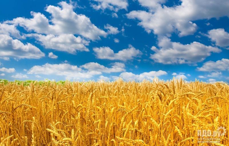 Закупаем Пшеницу! Ячмень! Горох! На Ишалино!