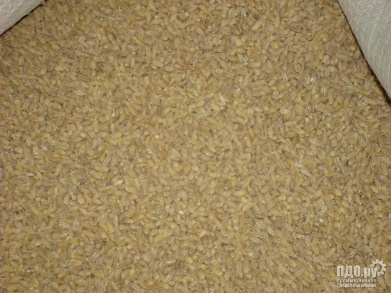 Крупы от производителя: перловая-ячневая,пшеничная,пшено