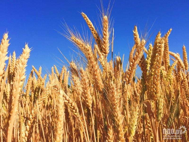 Продаем пшеницу, кукурузу, ячмень, овес, комбикорм