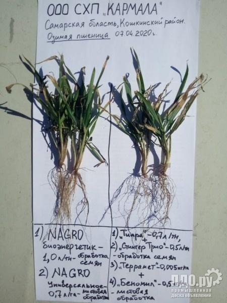 НАГРО -биоорганический комплекс для протравки семян Озимых