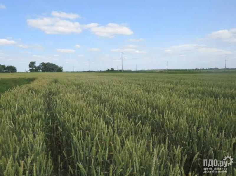 Земельный участок сельхозназначения 6000 Га