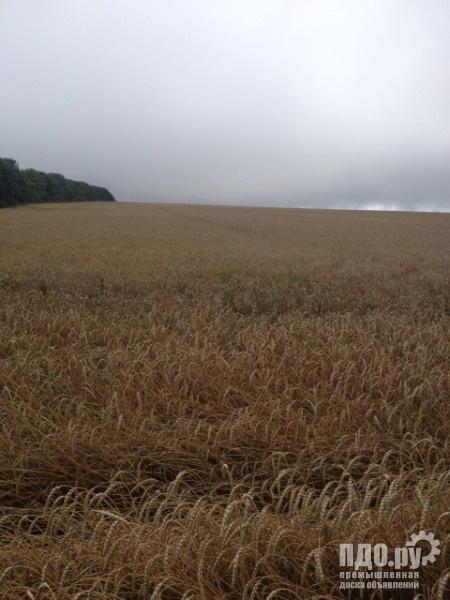 Земельный участок 430 Га пашня