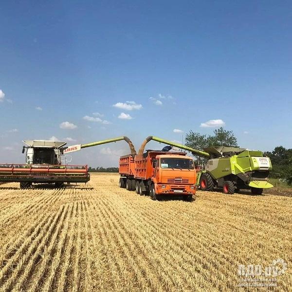 Найм камазов на уборку зерновых