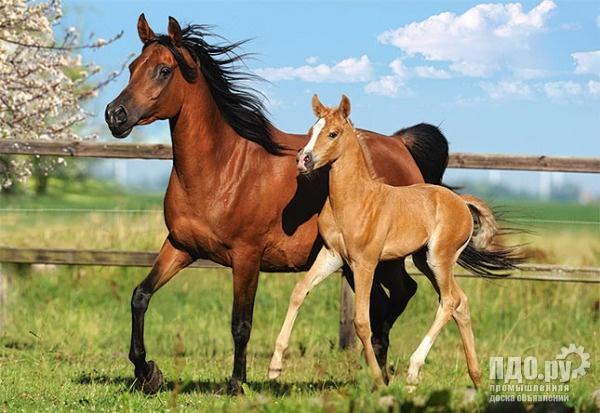Куплю лошадь живым весом