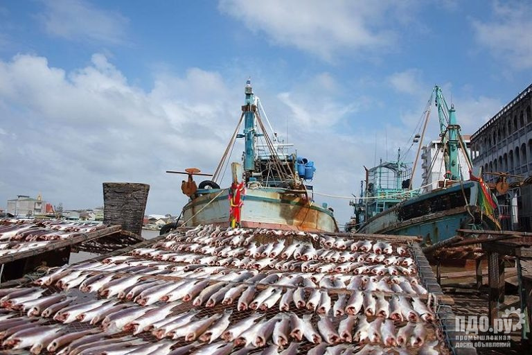 Предлагаем свежемороженную рыбу по оптовым ценам