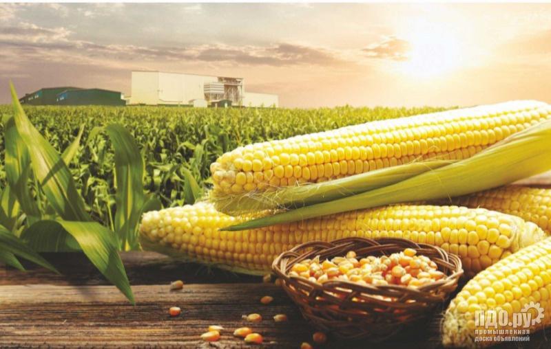Закупка Кукурузы с поля 10400 в зачете